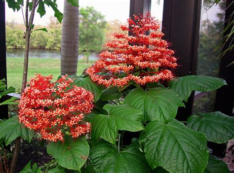 container gardening in florida 246 best images about florida container gardening and
