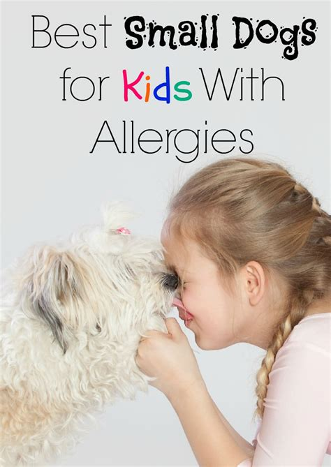 best dogs for with allergies best small dogs for with allergies dogvills