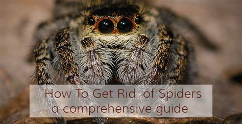 how to get rid of spiders using spider repellents
