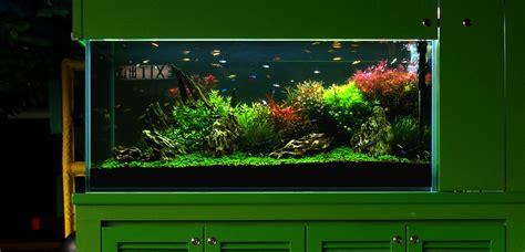 Aquascape Designs For Aquariums Bubbles Aquarium Aquascapes Tank Setups Projects