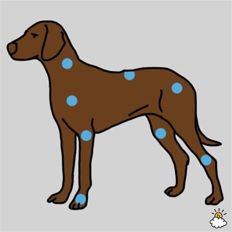 arthritis in dogs these 6 at home treatments will ease your s arthritis i m so glad i