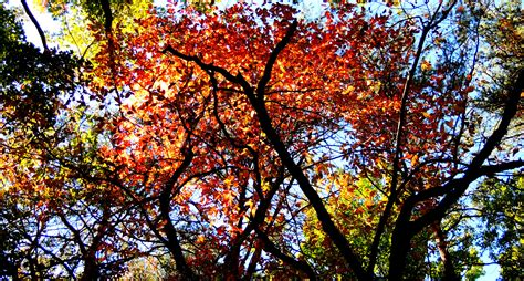in fall sunday stills trees soletusknow