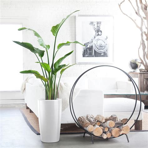 indoor plants nyc office  house plant delivery