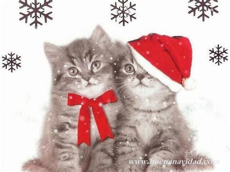 Imagenes Navidad Gatitos | fiestas de navidad gifs gatos navidad