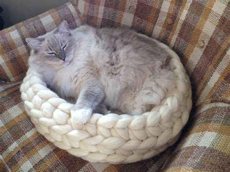 how to a not to cats ragdoll cats everything you need to about ragdoll cats kittens