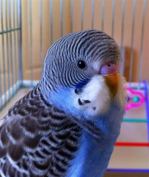Budgies are Awesome: February 2013