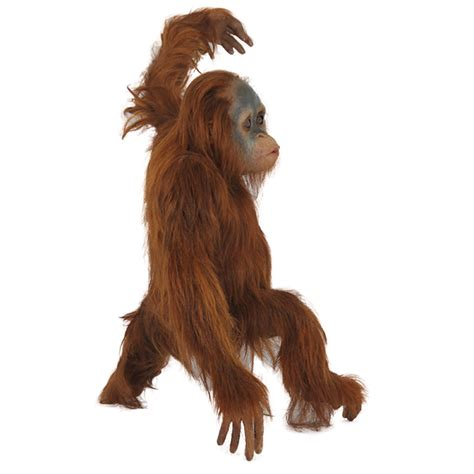 Dog Decorations For Home by R 016 Orangutan Baby With Real Hair Protheme Global