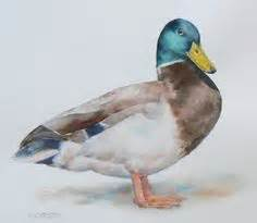 watercolor duck tutorial learn to paint mallard duck watercolor tutorial