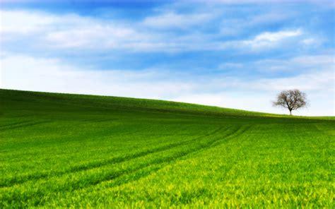 grassy hill  ryanstfu  deviantart