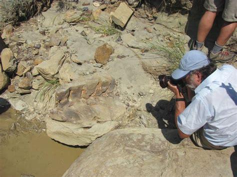 Who Find Dinosaur Bones For Dinosaur Bones In Eastern Montana Taking The