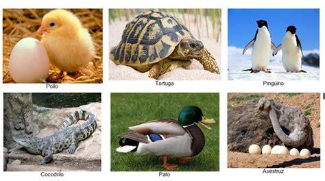 Imagenes De Animales Que Nacen Del Huevo | dibujos para colorear animales que nacen del huevo ideas