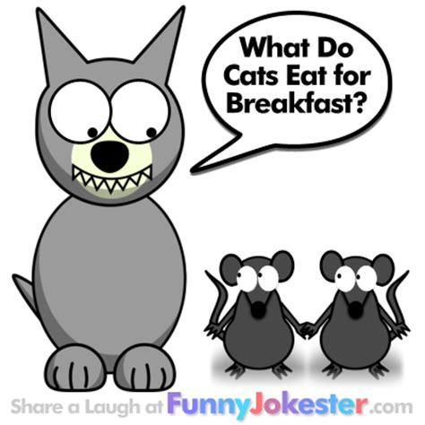 witty cat food cat jokes cat jokes at jokester
