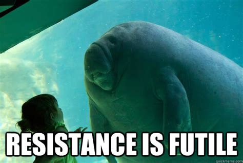 manatee meme the gallery for gt manatee