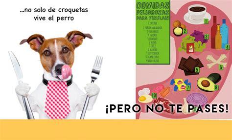 alimentos mascotas alimentos da 241 inos para los perros neostuff
