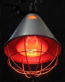 heat lamp poultry heat lamps and bulbs livestock heat