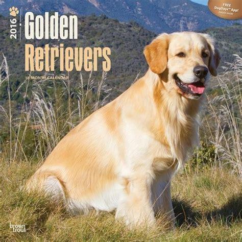 2018 golden retriever calendar golden retriever calendarios 2018