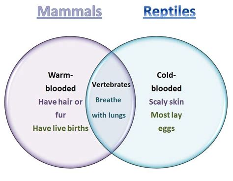 venn diagram of reptiles and hibians learning ideas grades k 8 mammals and reptiles venn diagram