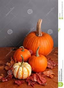 potiron d automne et courge d 233 corative image stock image
