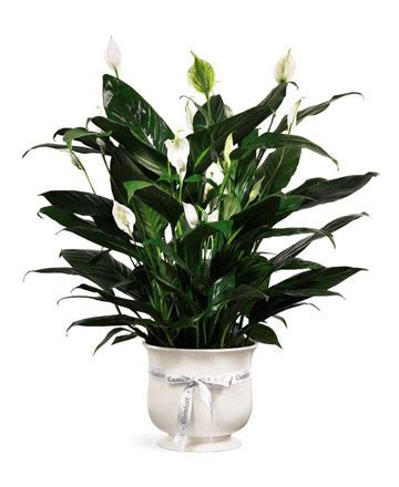 comfort planter ftd comfort planter royer s flowers and gifts flowers