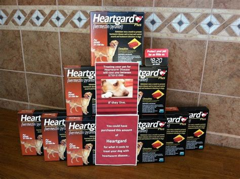 heartworm medicine for puppies worm medicine for dogs protecting the of your
