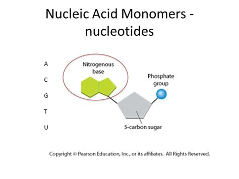 protein nucleic acid biomolecules nucleic acids and proteins ppt