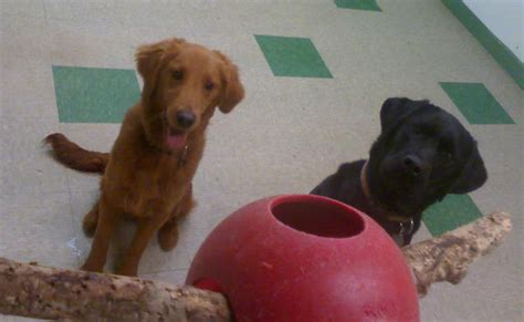places to play with puppies paws for awhile daycare