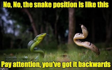 Snake Meme - reptilian yoga it s not for the faint of heart imgflip