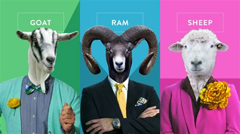 from the ram to the knock sheep ram goat you vote