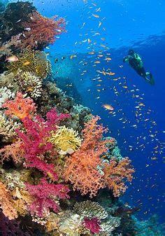 into the blue underwater sounds of nature for relaxation etkinliklerinizi g 246 nderin sg etkinlik 214 zel bulteni nde