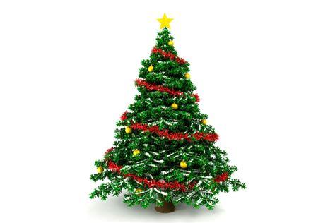 arbol de navidad precios c 243 mo elegir el mejor pino de navidad
