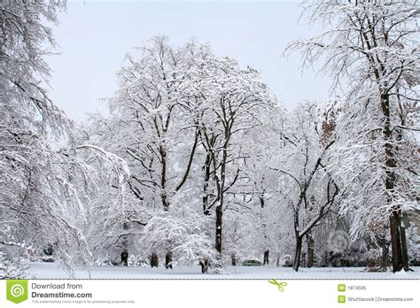 school in snow royalty free stock image image snow stock image image of gray branches outdoors