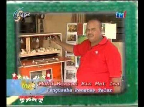 Mesin Penetas Telur Ayam Petelur buku pintar beternak bisnis ayam kung flv funnycat tv