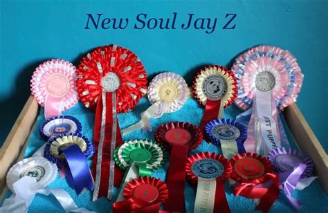 New Soul 7 chien elevage new soul eleveur de chiens bulldog