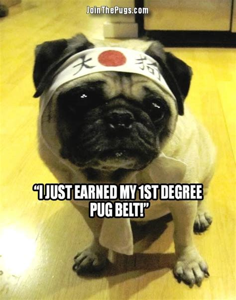 master pug join the pugs gt pug master