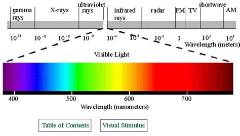 Visible Light Definition by Photosynthesis Biology 119 With Diana Martin At Rutgers