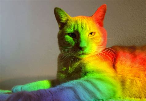 gif wallpaper rainbow rainbow gifs find share on giphy