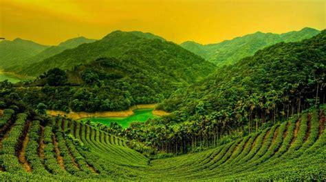 coffee plantation wallpaper bing landscapes wallpaper