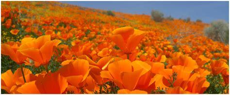 sarah hage artist  love  california sarah hage