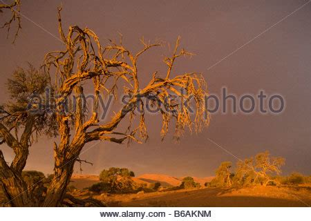 lone park lights sunset lights at namib naukluft desert pan namibia stock