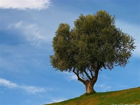 el otro arbol de 8484691594 a escuela de atletismo fuenlabrada 191 habremos encontrado otro beneficio en el olivo