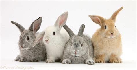 nice wallpaper rabbits carefully selected