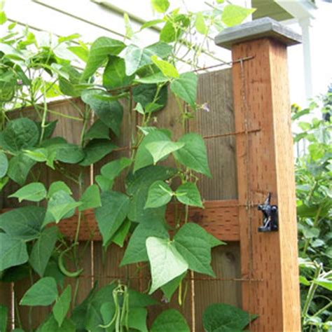 inexpensive vegetable trellis grows vegetables in small spaces