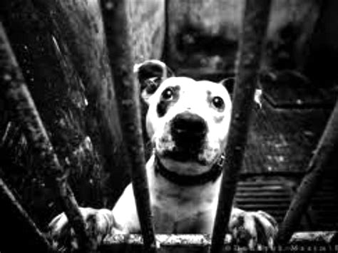 puppy stop and adopt stop animal abuse adopt rescue dogs