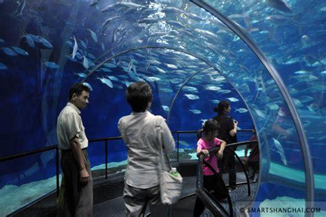 Lu Aquarium 2015 deadbeat places i take my toddler smartshanghai