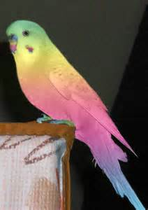 budgie colors a colourful budgie by cashius on deviantart