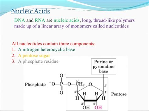 Nucleic Acids Ppt Ppt Of Acid
