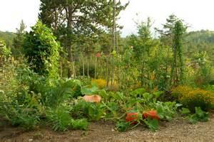 association de l 233 gumes au jardin potager bio nopanic