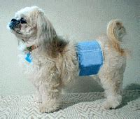 stop male dog from peeing in house male dog belly bands pu housetraining wrappers planet urine