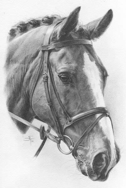 Sketches Horses by Portraits And Livestock Drawings Commission Your Own