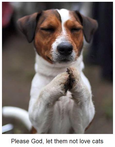 puppy praying awww talk